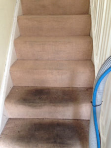 before carpet cleaning london service